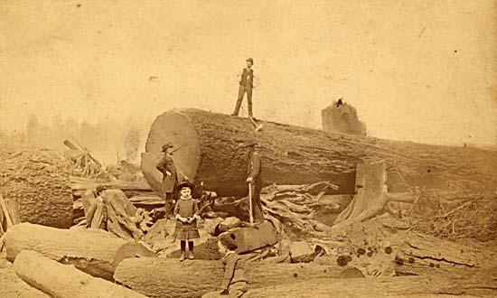 georgiastreettree.logged.1886