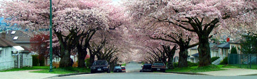 Trees.in.blossom